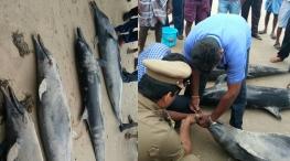 dolphins dead tuticorin