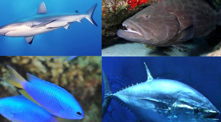 mercury hazardous fishes