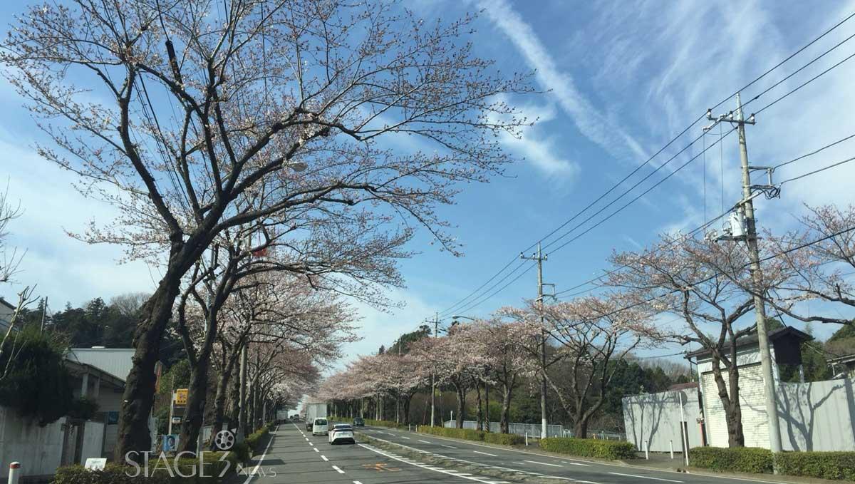Japan Street view with sakura flowers