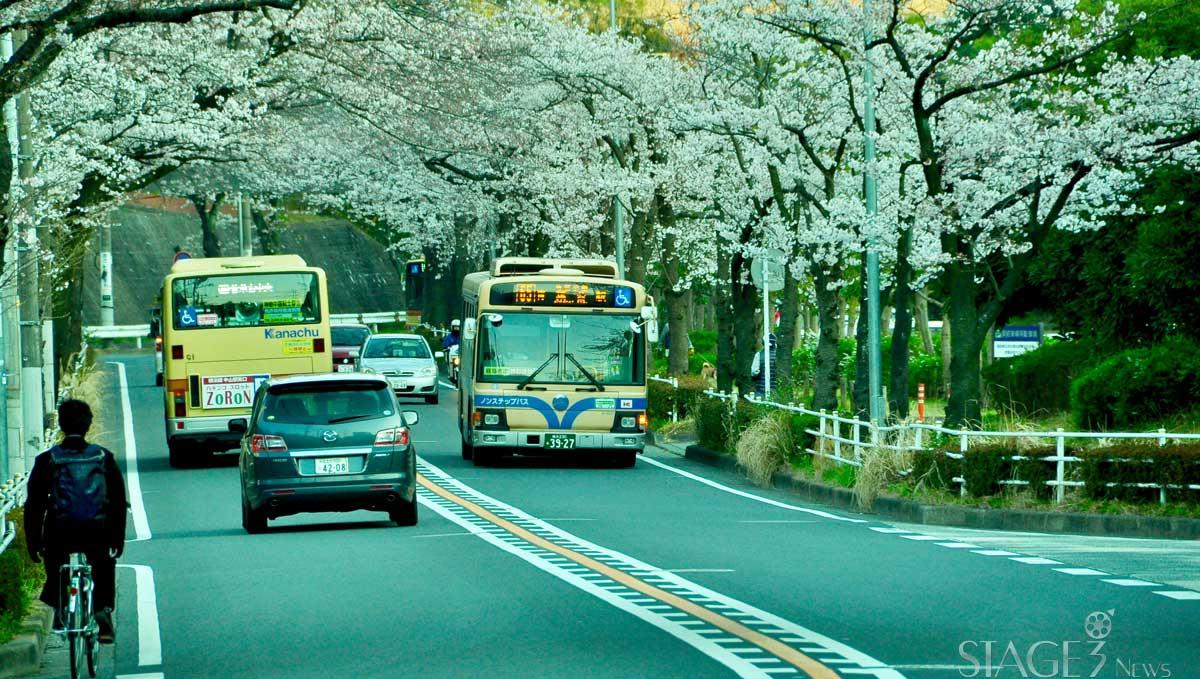 Japan roadways sakura view