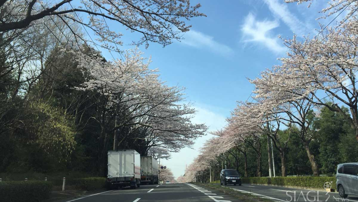 Highway sakura view
